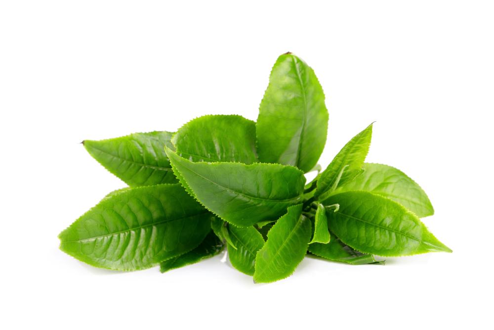 alientos antioxidantes